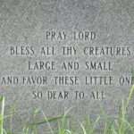 Bless All Thy Creatures
