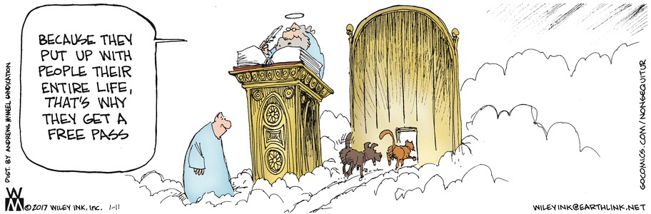 Death Cartoon Why All Dogs And Cats Go To Heaven A Good
